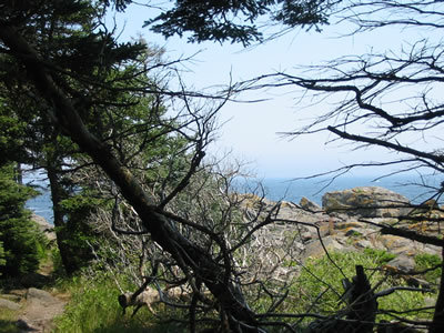 ocean view through the trees on Monhegan Island