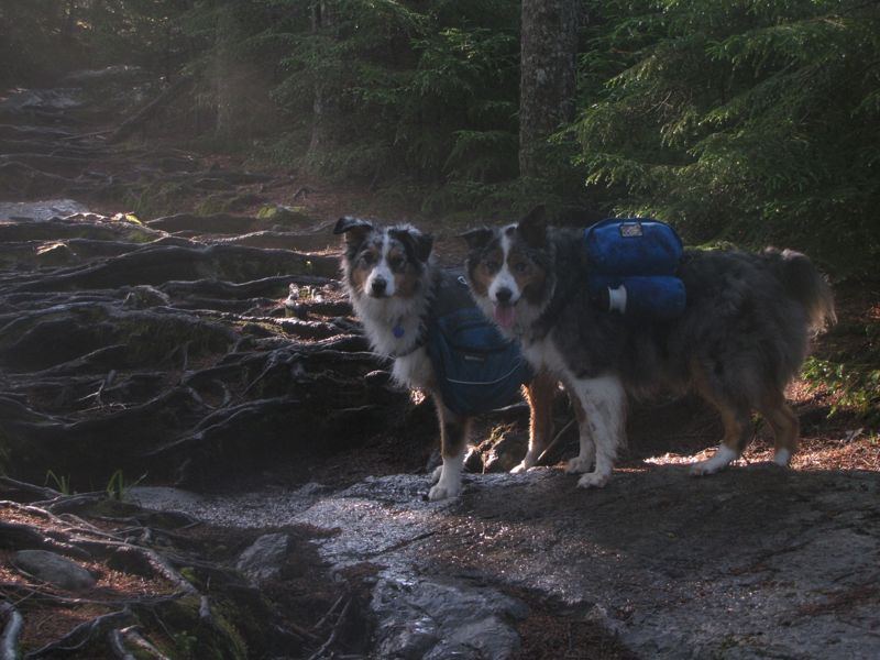 My hiking buddies