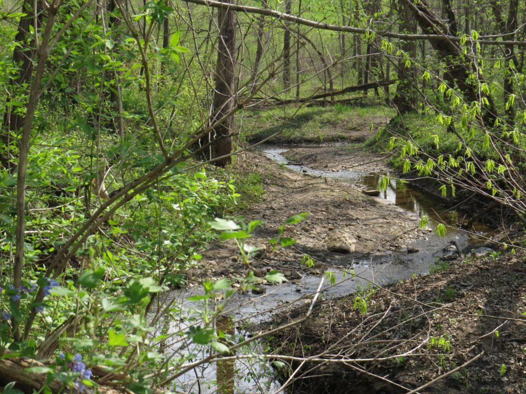 Cedar River tributary
